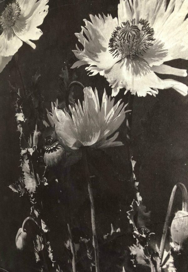 zwartwitclosup